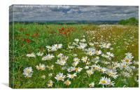 Summer Fields in County Durham, Canvas Print