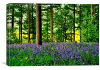 YORKSHIRE BLUEBELL WOODLAND, Canvas Print