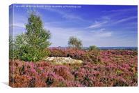 Purple Heather on Brimham Moor, Nidderdale, Canvas Print