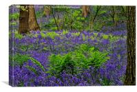Bluebells and Ferns, Canvas Print