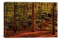 Autumn Woodland Evening, Canvas Print