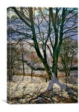 Winter Trees, Canvas Print