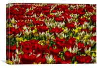 Tulip Tapestry, Canvas Print