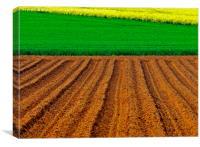 Crops, Canvas Print