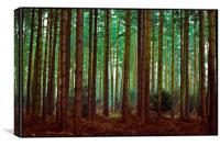 hide and seek, Canvas Print