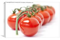 Tomatoes, Canvas Print