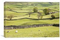 Wensleydale Fields, Canvas Print