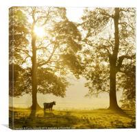 Mist at Sunrise, Canvas Print