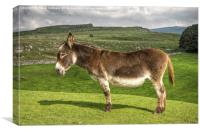 Donkey in the Dales, Canvas Print