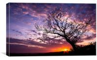 Oak Tree Sunset, Canvas Print