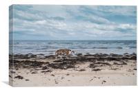 Borzoi stalking Alnmouth Beach, Canvas Print