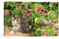 Kitties, Canvas Print