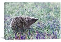 Ozzy The Hedgehog, Canvas Print