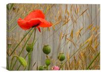 Field Poppy & Golden Oats, Canvas Print