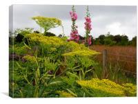Fennel Flowers & Hollyhocks, Canvas Print