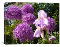 Purple Allium Giganteum & Irises, Canvas Print