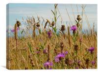 Wild flowers & seed heads, Canvas Print