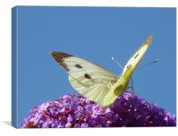 Large White Butterfly, Canvas Print