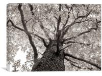 Tree Tops, Canvas Print