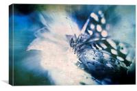 Blue Tint Butterfly, Canvas Print