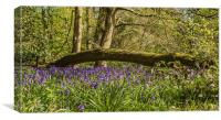 Bluebells in Ambarrow Woods, Canvas Print