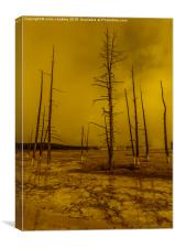 Ethereal Landscape in Yellowstone Park, Canvas Print