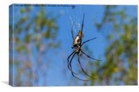 Female Golden Orb Spider, Canvas Print