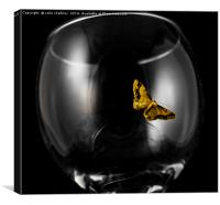 Moth on a wineglass, Canvas Print
