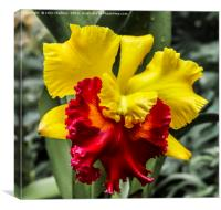 Yellow and Red Ochid, Canvas Print
