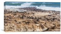 Fur Seals at Cape Cross, Canvas Print