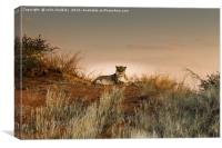 Lioness in the Last Rays of the Sun, Canvas Print