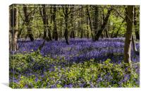 Binfield Heath Woods in South Oxfordshire, Canvas Print