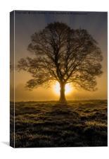 Sunrise in Marnhull, Dorset, Canvas Print