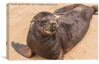 Fur Seal Basking at Cape Cross, Canvas Print