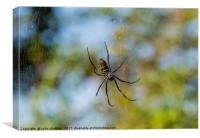 Golden Orb Spider, South Africa, Canvas Print