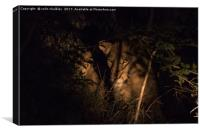 A lioness in the South African Bush late at night, Canvas Print