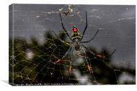 Female Golden Orb Spider , Canvas Print