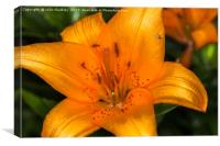 Fly on a Lily, Canvas Print