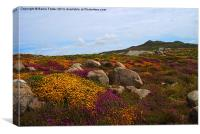 Moorland on St Davids Head, Canvas Print