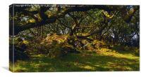 Tŷ Canol  Ancient Woodland, Canvas Print
