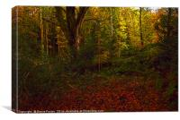 Little Milford Woods #3, Canvas Print