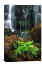 Waterfall and ferns, Canvas Print