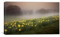 Misty Daffodils, Canvas Print
