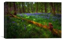Bluebells and a fallen tree, Canvas Print