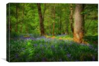 Mystical woodland, Canvas Print