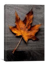 autumn leaf colour pop, Canvas Print