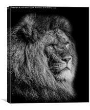Male Lion, Canvas Print
