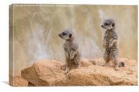 baby meerkats, Canvas Print