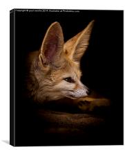 Fennic fox, Canvas Print