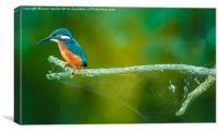 kingfisher on a branch, Canvas Print